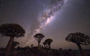 Picture the sky, stars, clouds, trees, night