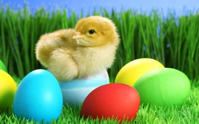 Picture grass, eggs, Easter, chicken