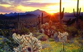 Picture mountains, nature, cacti, plateau