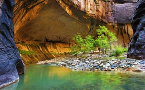 Picture leaves, trees, river, stones, rocks, canyon
