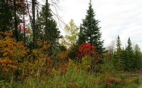 Picture autumn, forest, trees, colors, forest, Autumn, fall