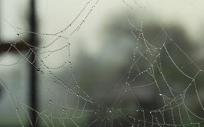 Picture drops, macro, Rosa, web, holes, holes, gossamer, Parvata