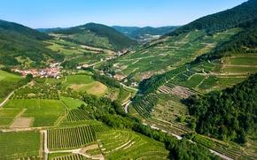 Picture mountains, field, home, Austria, panorama, forest, plantation, Wachau
