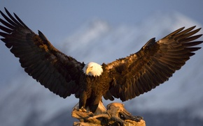 Wallpaper in the mountains, wings, bird, eagle