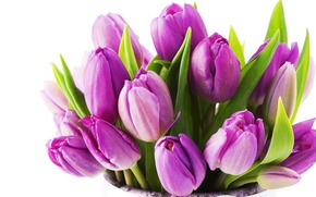 Picture flower, flowers, nature, bouquet, spring, tulips, beautiful, lilac