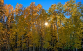 Picture autumn, forest, the sun