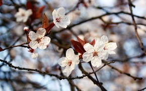 Picture flowers, branches, spring, leaves, bokeh