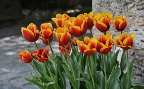 Picture treatment, spring, tulips, spring, Tulips