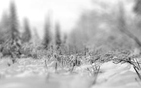 Wallpaper focus, snow, Winter