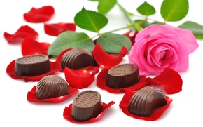 Picture flowers, chocolate, beauty, bouquet, candy, rose, beautiful, beautiful, chocolate, petals