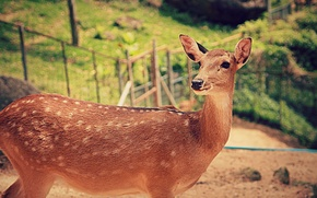 Picture deer, Animals, Bambi