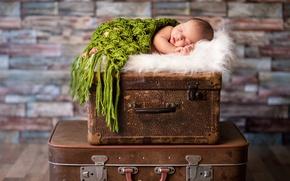 Picture child, baby, sleeping, suitcase, baby, baby, kid, Sleep, Infants