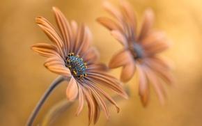 Picture flowers, petals, stem, pair
