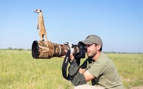 Picture photographer, lens, meerkat