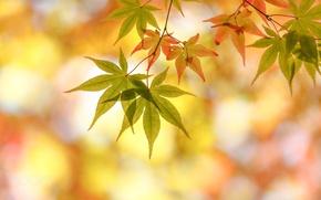 Wallpaper autumn, foliage, macro, bokeh