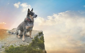 Picture the sky, clouds, rock, moss, dog