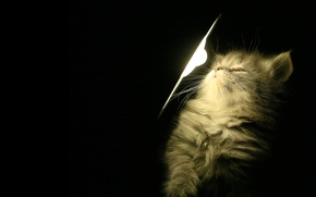 Picture light, kitty, lamp