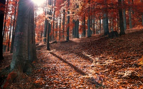 Picture autumn, forest, leaves, the sun, rays, fallen