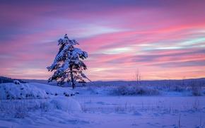 Picture winter, snow, sunset, tree, the snow, Sweden, Sweden, pine, Varmland County, Arvika, Varmland County, Arvika