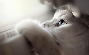 Wallpaper macro, window, cat