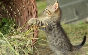 Picture grass, basket, kitty