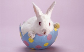 Picture Rabbit, White, Pink Background
