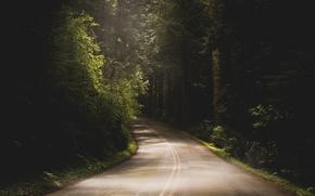 Picture road, asphalt, trees