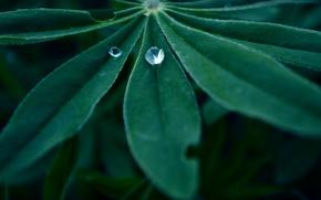 Wallpaper macro, nature, green, green, drop, nature, macro