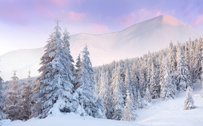 Picture winter, forest, clouds, snow, dawn, tree