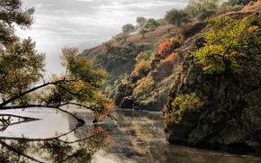 Picture leaves, trees, river, island, Dnepr, Zaporizhia, Khortytsya
