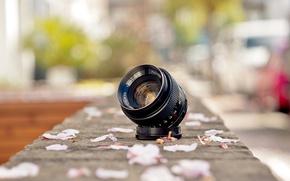 Wallpaper Fujinon, lens, petals, street