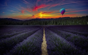 Wallpaper sunset, landscape, balloon, forest, field, lavender, trees, flowers