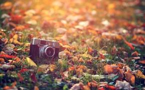 Wallpaper macro, the camera, light, treatment, leaves, heat, the sun, grass, autumn