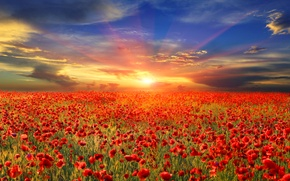 Picture field, the sky, the sun, rays, dawn, Maki, red