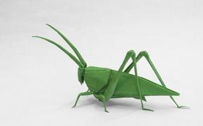 Wallpaper paper, grasshopper, origami
