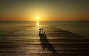 Picture sea, sunset, shadow, pierce, black cat