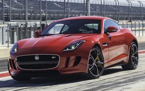 Picture Jaguar, 2014, Type