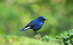 Picture bird, blue, baby