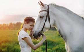 Wallpaper summer, girl, nature, horse