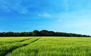 Picture field, forest, summer, trees, nature, tree, landscapes, field, spring