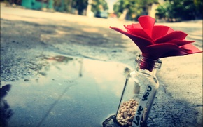 Picture flower, macro, love, stones, street, bottle, puddle, note, love, recognition