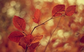 Picture cold, autumn, leaves, branches, tree, the wind, branch, foliage, leaf, focus, blur, branch, leaves, leaf, …