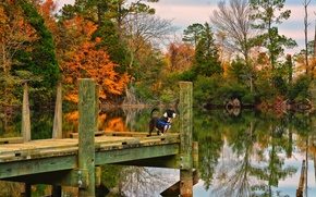 Picture autumn, lake, dog, Suffolk