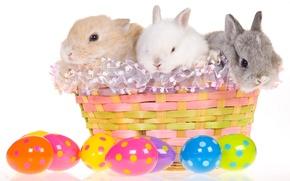 Picture basket, egg, Easter, rabbits, easter