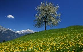 Picture the sky, flowers, mountains, tree, dandelion, Austria, meadow