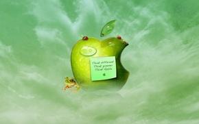 Wallpaper apple, frog, Apple, leaf