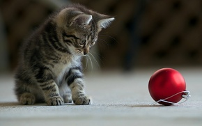 Picture red, kitty, grey, the game, ball, Christmas, striped