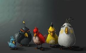 Wallpaper birds, minimalism, birds, angry