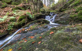 Picture autumn, forest, trees, stream, slope