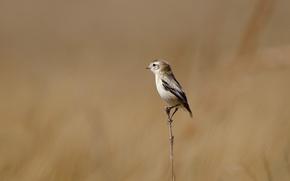 Wallpaper branch, background, bird